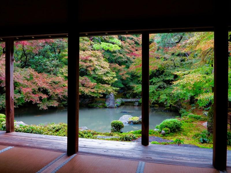 蓮華寺紅葉庭と池