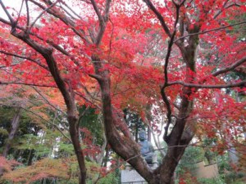 栄摂院紅葉木