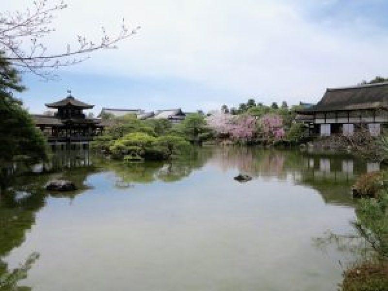 平安神宮桜お花見14