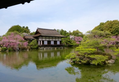 いかにも京都らしい桜、お花見なら【平安神宮】その②