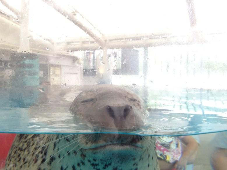 京都水族館19