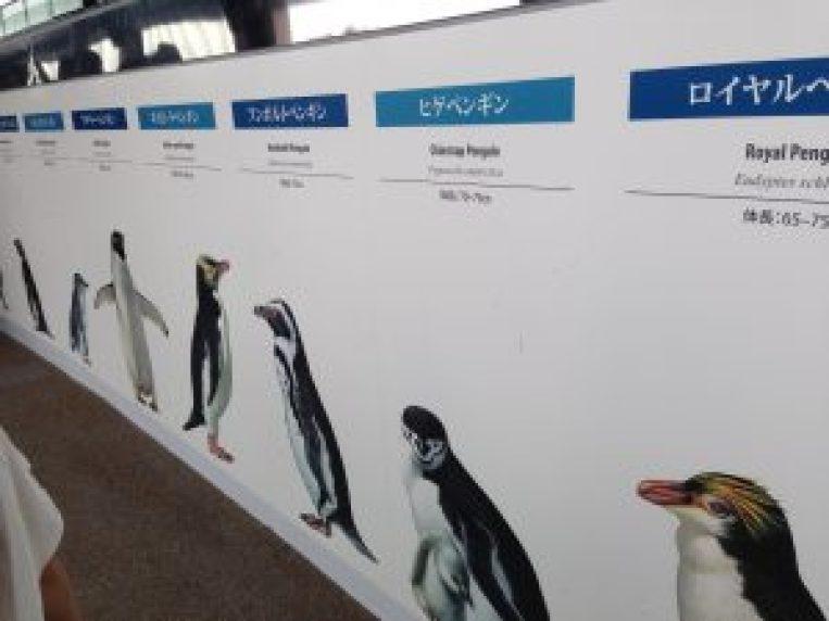 京都水族館456