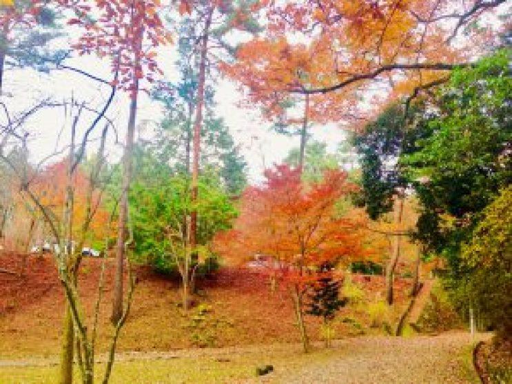 宝ヶ池公園紅葉12