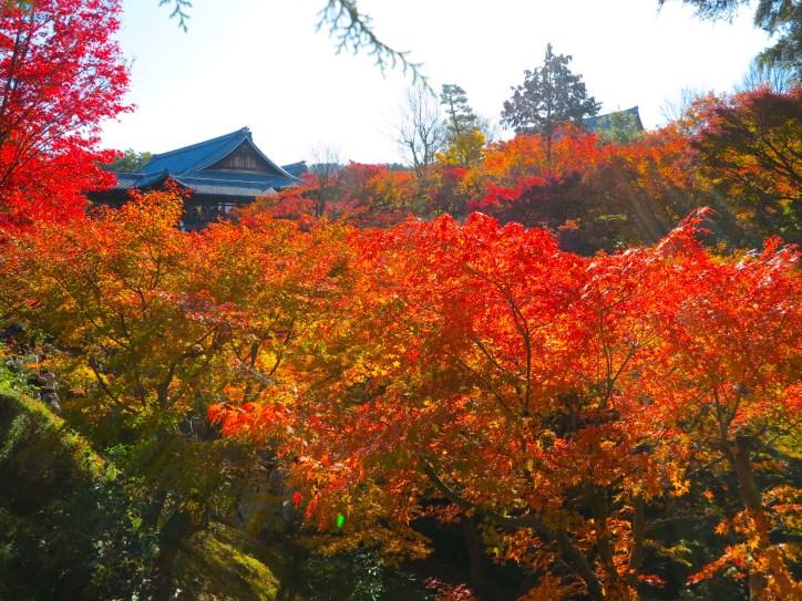 東福寺紅葉0