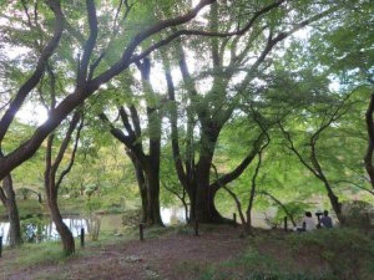 京都府立植物園26