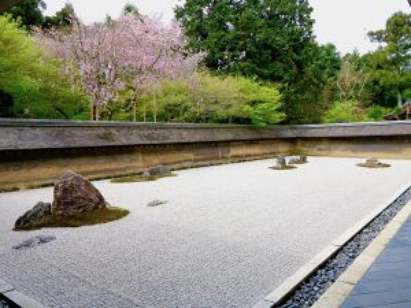 龍安寺桜お花見1
