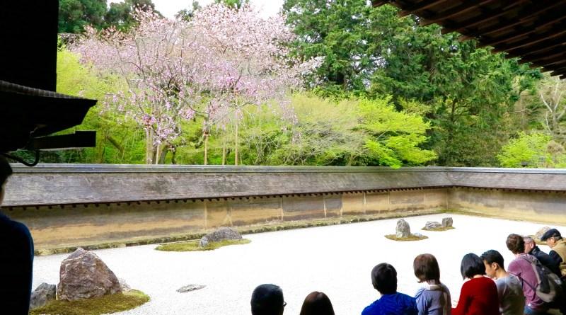 龍安寺桜お花見5