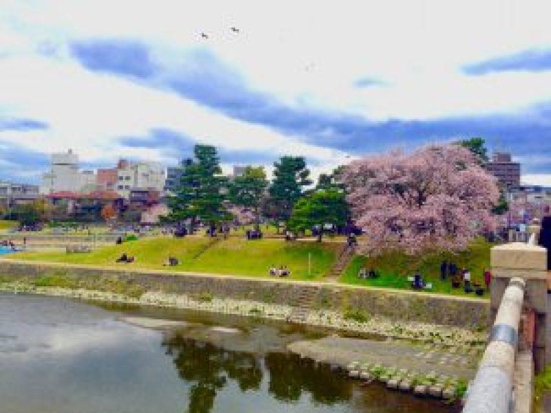 京都桜お花見鴨川デルタ4