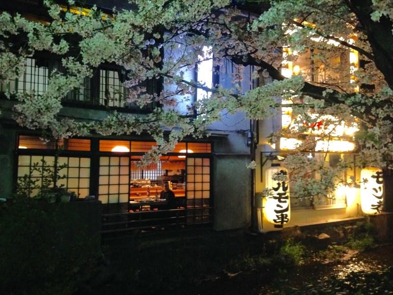 祇園白川高瀬川桜お花見3
