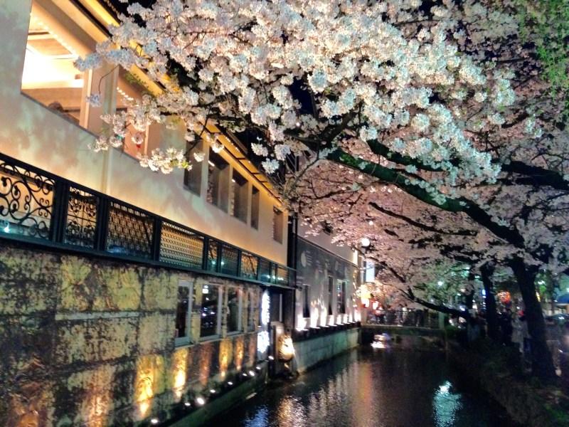 祇園白川高瀬川桜お花見7