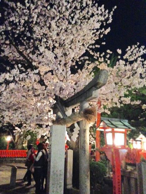 祇園白川高瀬川桜お花見16