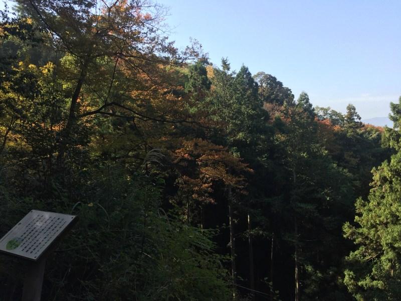 大文字山3