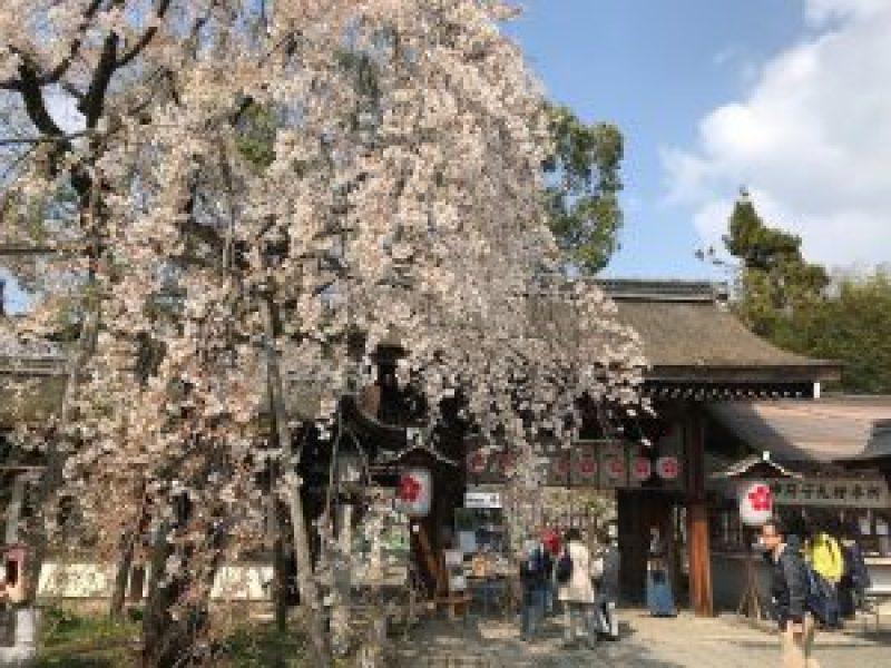 平野神社13