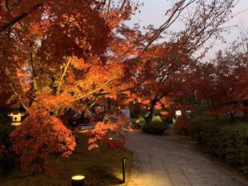 青蓮院紅葉ライトアップ15