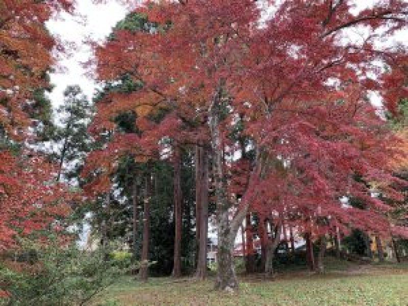 鷺宮神社11