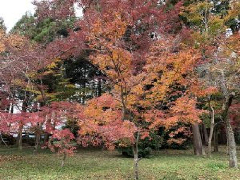 鷺宮神社10