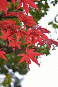 永観堂の紅葉2016