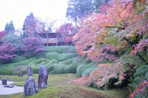 光明院の紅葉2016 波心の庭