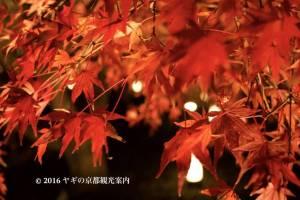 大覚寺の紅葉ライトアップ2017