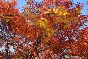 退蔵院の紅葉