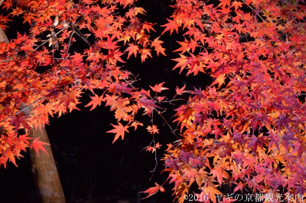 北野天満宮の紅葉ライトアップ