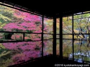 瑠璃光院の紅葉2018