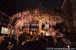 六角堂桜ライトアップ