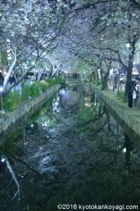 木屋町の桜ライトアップ