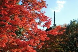京都・真如堂の紅葉