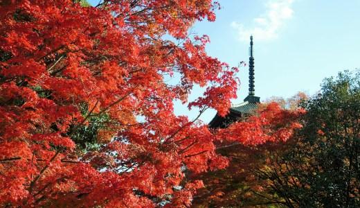 🍁 真如堂「真正極楽寺」の紅葉(2019年 JR東海「そうだ京都、行こう。」の寺院)