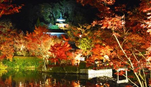 🍁 京都・永観堂(禅林寺)紅葉☆ライトアップ☆夜間拝観 Eikando KYOTO