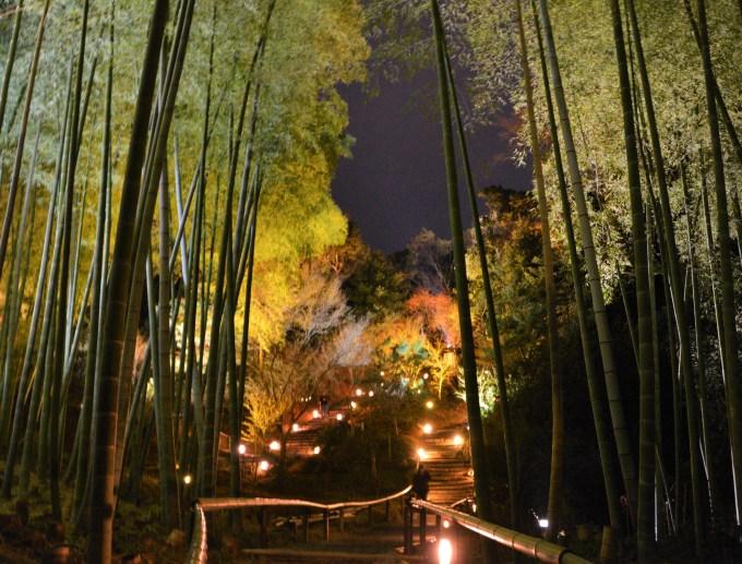 京都・高台寺・夜間拝観