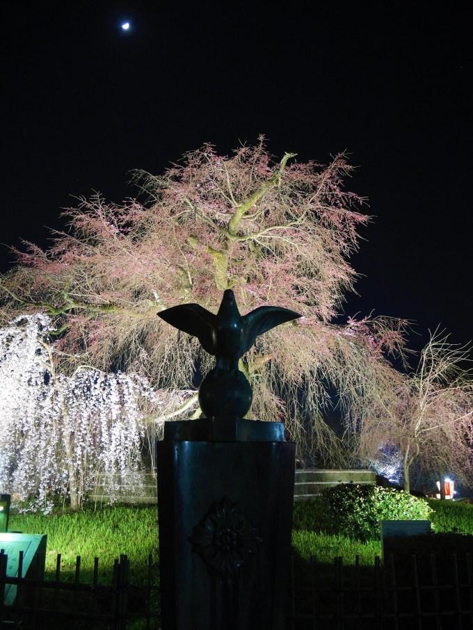 京都・祇園夜桜・円山公園
