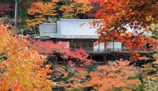 🚋 京都『トロッコ列車』紅葉の車窓「星のや京都」星野リゾート(旧 嵐峡館)