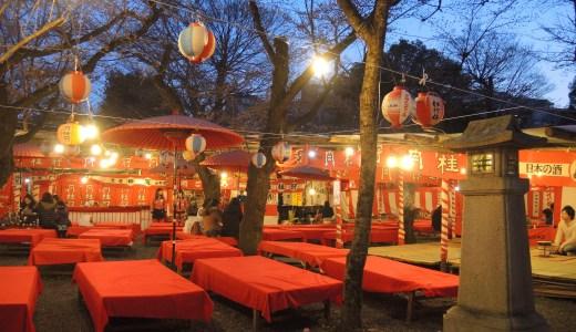 🌸 京都の花見茶屋「平野神社」の桜茶屋と露店