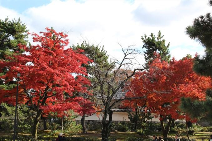 30法堂の外の紅葉