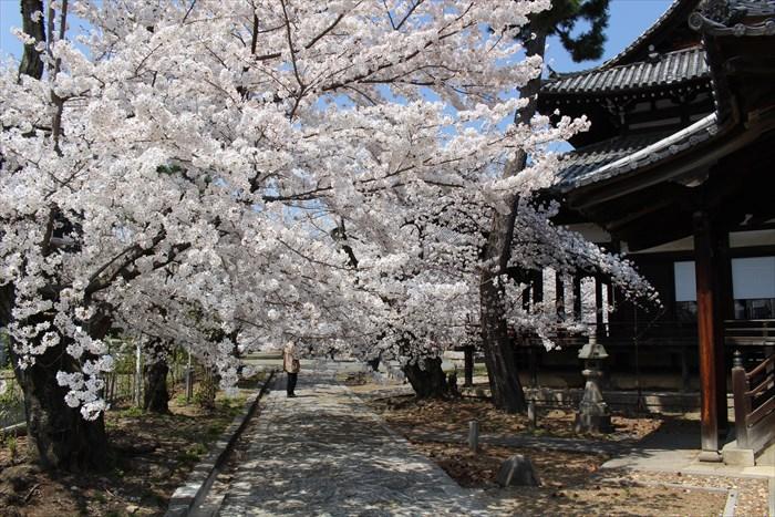 7立本寺参道