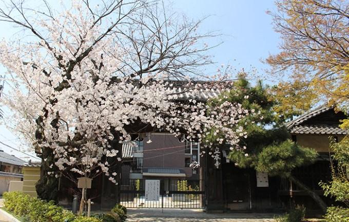 1立本寺正門と桜