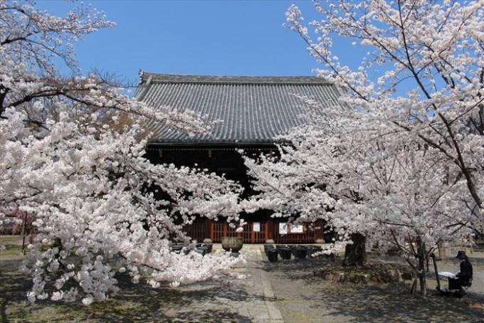 18立本寺の本堂と満開の桜