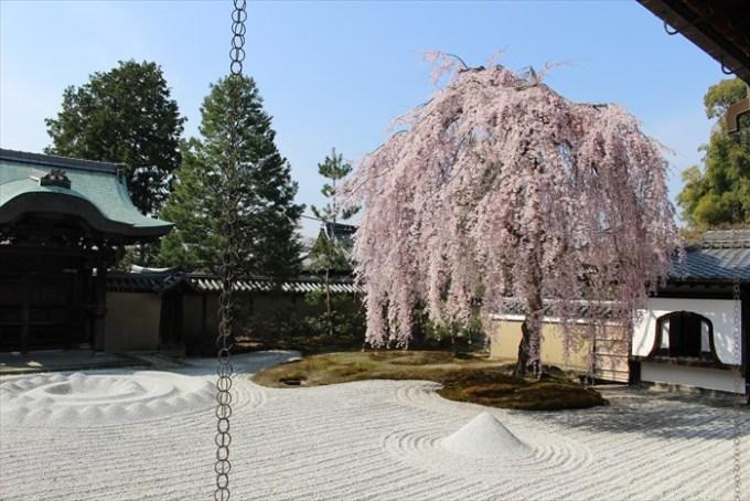 21高台寺の勅使門と桜