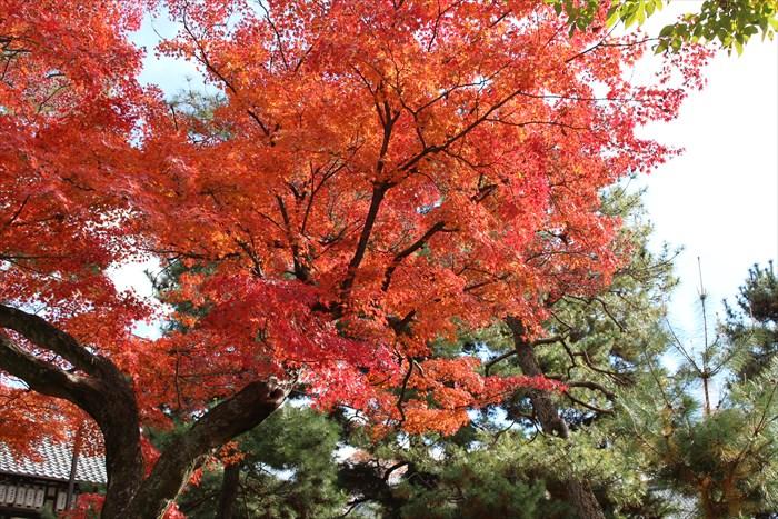 45きれいな見頃の紅葉