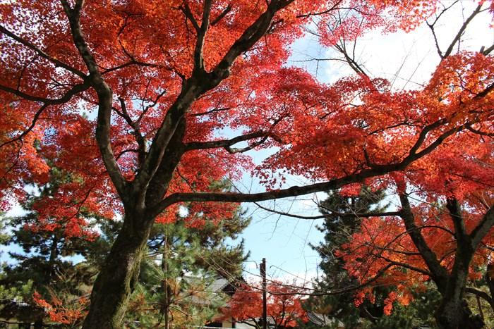 23建仁寺境内の紅葉
