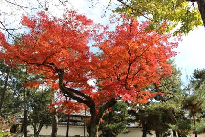 22ハート型の紅葉