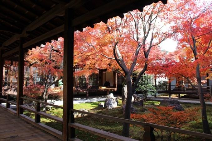 5建仁寺の紅葉:潮音庭東側