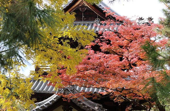 18三門屋根と紅葉