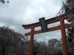 平野神社見どころ
