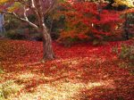 宝筐院紅葉