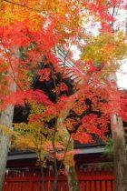 赤山禅院紅葉