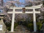 宗忠神社桜見ごろ
