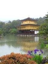 金閣寺カキツバタ